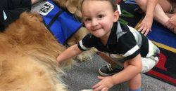 Hat éves kisfiam szorongó alkat, és kutyaterápiát javasoltak a tünetek enyhítésére. Tényleg alkalmas ez a terápia arra, hogy nyitottabbá váljon, és szívesebben barátkozzon a társaival?