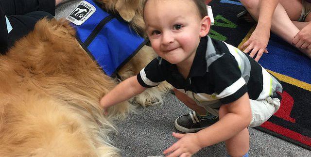 kutya-terapia