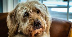 Egy hete elpusztult öreg kutyusunk, aki a család kedvence volt. Nem tudjuk, hogy mondjuk meg Zorkának, ötéves unokánknak, aki nagyon szerette őt. Eddig azt mondtuk, hogy állatkórházban van, de sokáig már nem hitegethetjük ezzel.